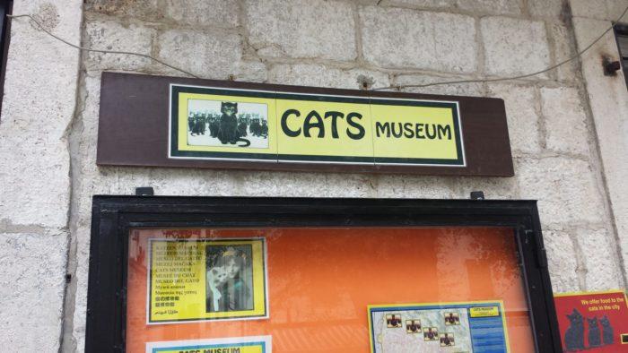 Visit kotor cat museum