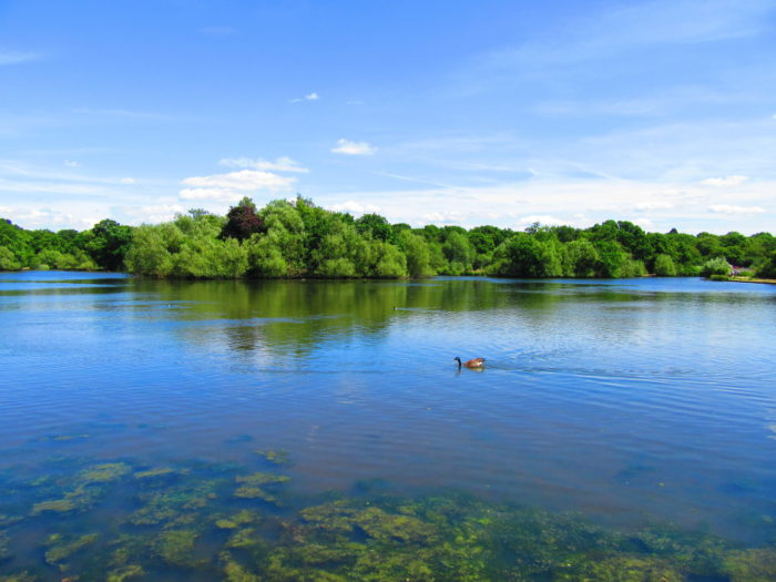 Epping Forest: The Perfect London Day Hike