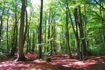 Epping Forest Walks: The Best London Day Hike