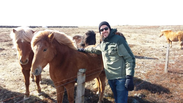 Horse Riding in South Iceland