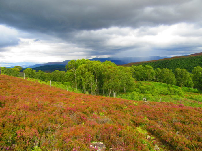 where to stay in the cairngorms