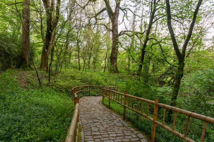 The lush Kutaisi Botanical Garden