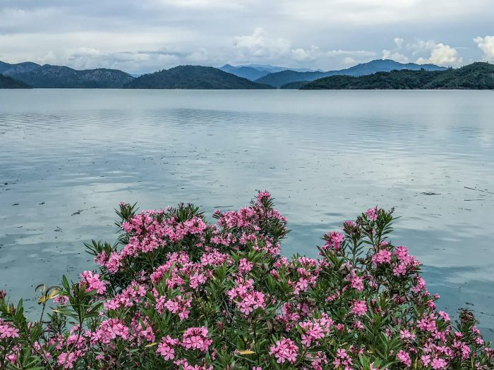Shasta Lake: Stop on the Seattle to SF drive
