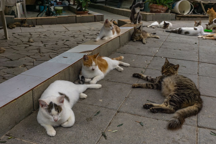 Tala Monastery Cat Park is one of the best things to do in Paphos for cat lovers
