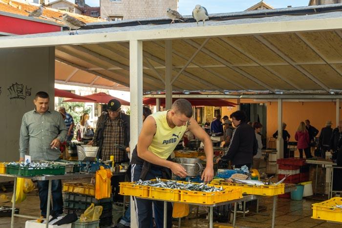 Split's Fish Market
