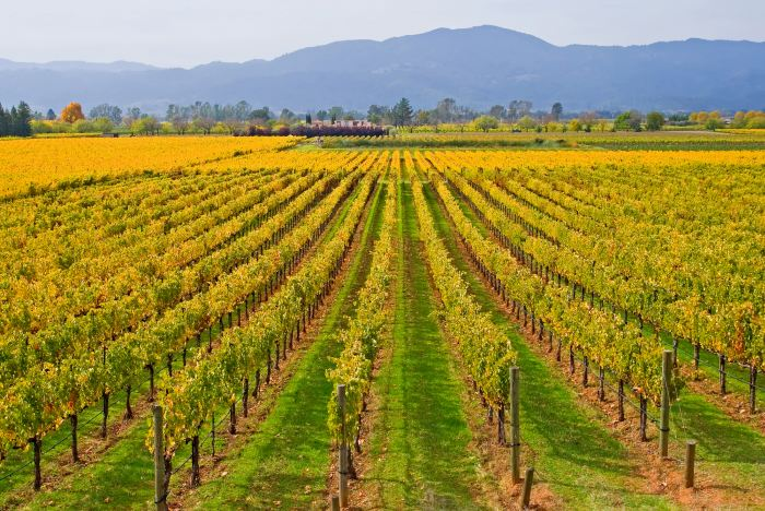 Vineyards of Napa Valley