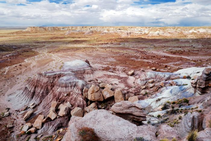 Stunning petrified wood in the Petrified Forest National Park