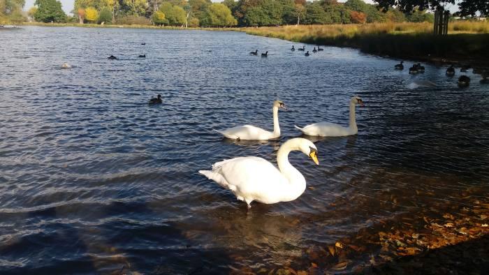 Pen Ponds in Richmond Park