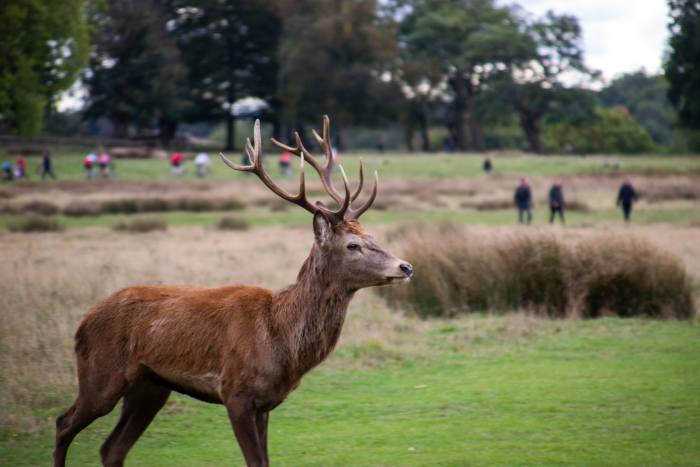 Spotting Deer in Richmond Park