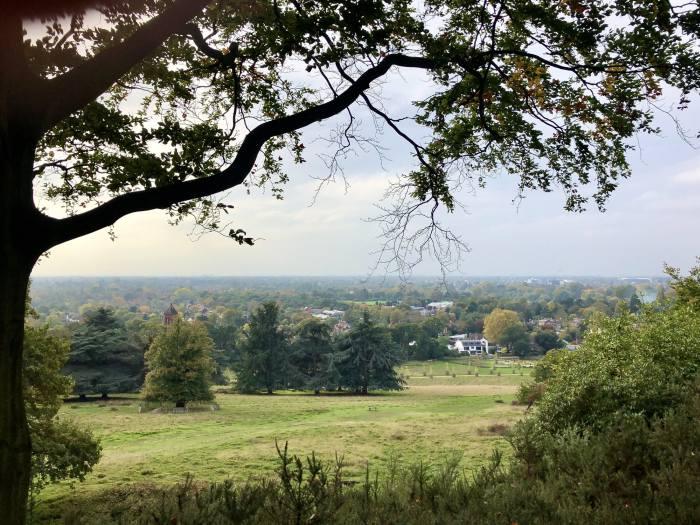 Views from Richmond Park