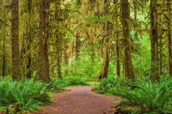 The Ultimate 2 to 3 Days in Olympic National Park Itinerary