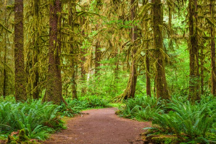 Hall of Mosses in Olympic National Park