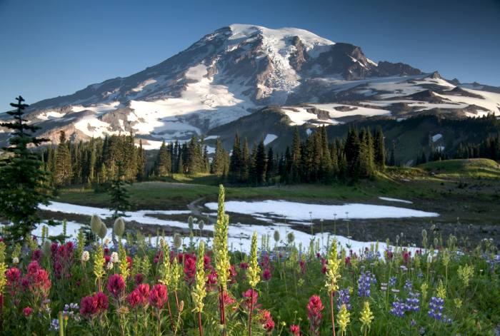 Paradise Overlook in Mount Rainier