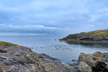 The Perfect Seattle to San Juan Islands Day Trip Itinerary