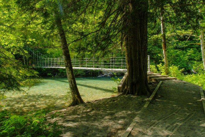 Grove of the Patriarchs in Mount Rainier