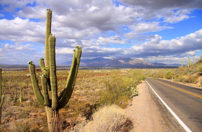 Saguaro just outside of Tucson