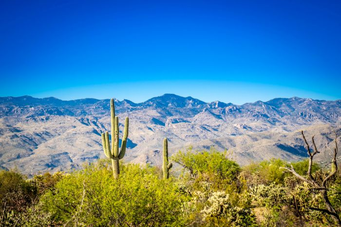 A view of Rincon Mountains surrounded by Saguaro Cactus