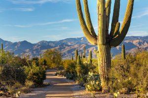 Beautiful Saguaro National Park